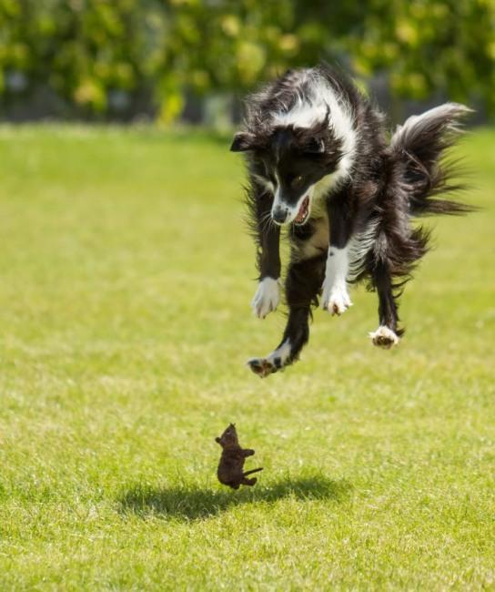 Фото прикол  про собак и мышей