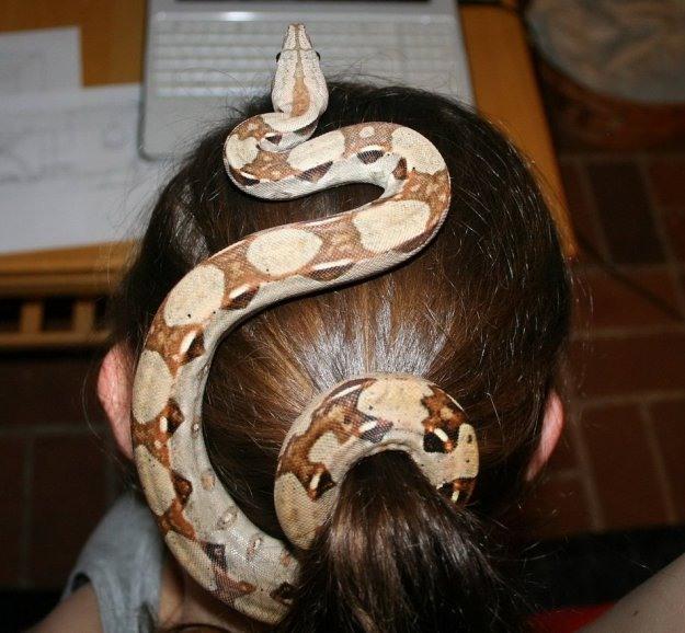 Фото прикол  про змей