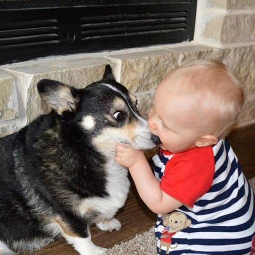 Фото прикол  про детей и собак