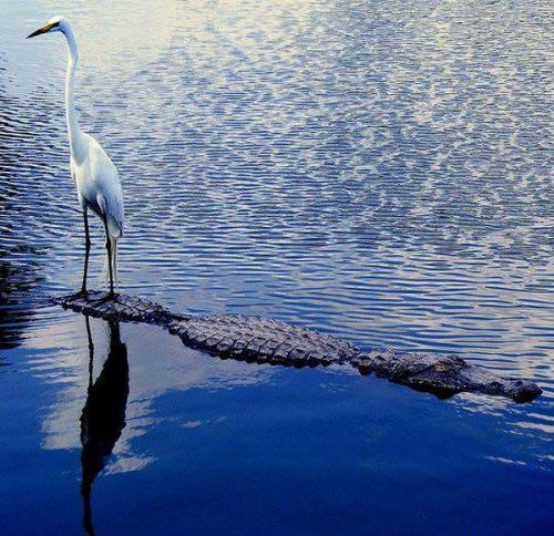 Фото прикол  про крокодилов