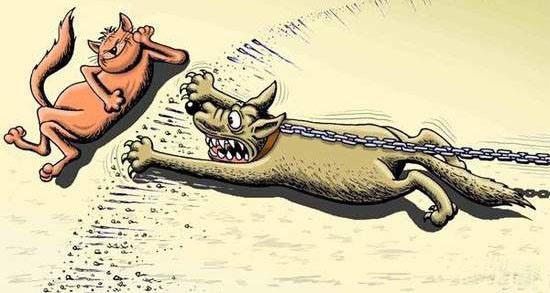 Картинка  про котов и собак