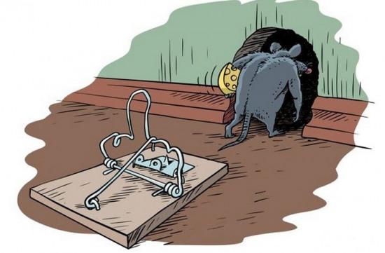 Картинка  про мышеловку и мышей