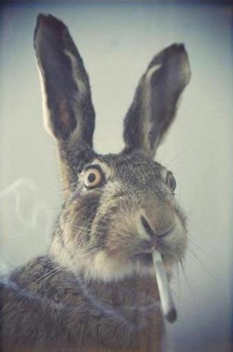 Фото прикол  про зайцев и курение