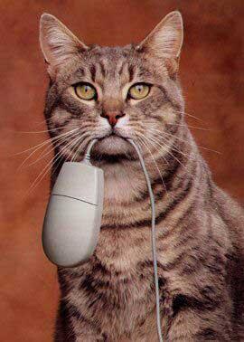 Фото прикол  про компьютерную мышь и котов
