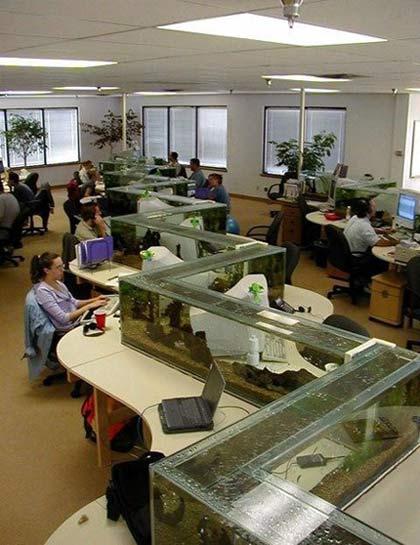 Фото прикол  про аквариум и офис