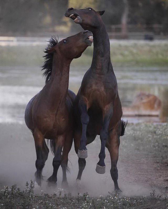 Прикольные картинки про лошадку, картинке маме