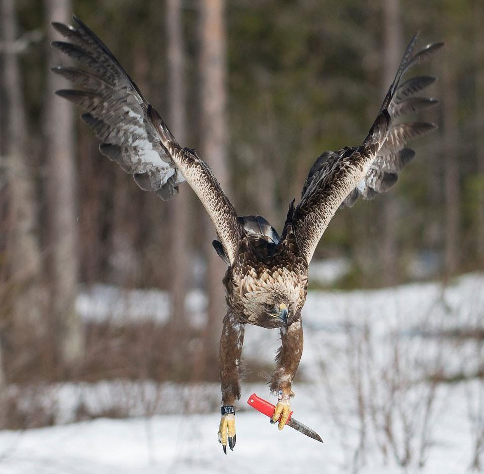 прикольные картинки с восхищением о птице орел предложение вызвало слабое