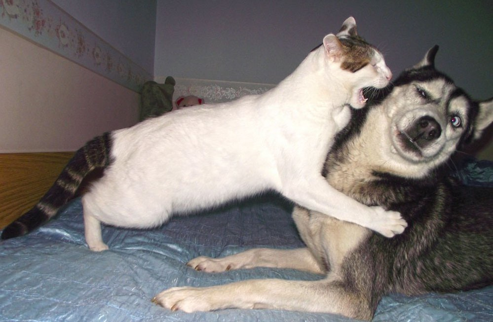 Смешные картинки про кота и собаку