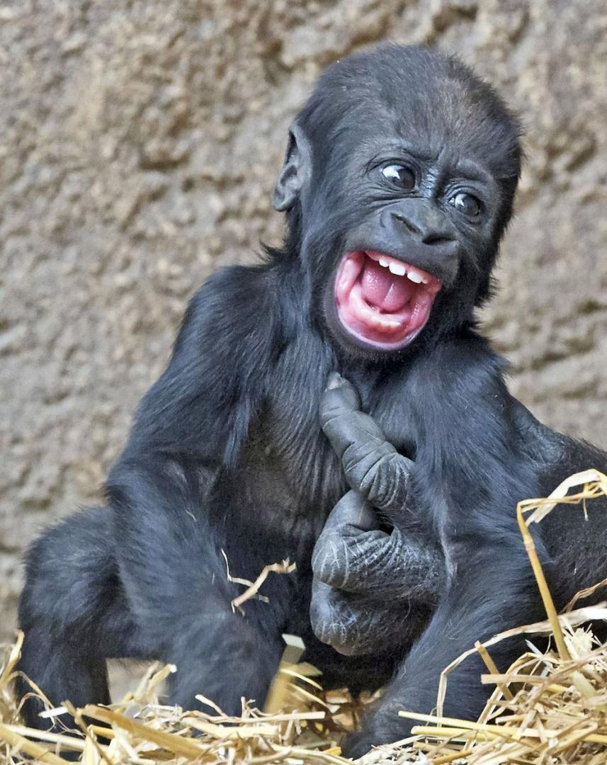 День, прикольные картинки на аву обезьяны