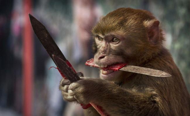 Фото прикол  про обезьян и нож