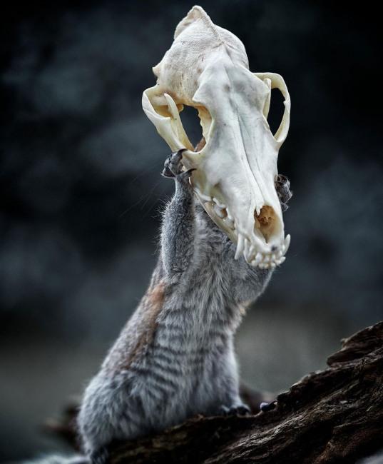 Фото прикол  про череп черный