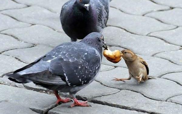 Фото прикол  про птиц и голубей