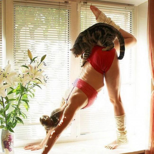 Фото прикол  про йогу и котов