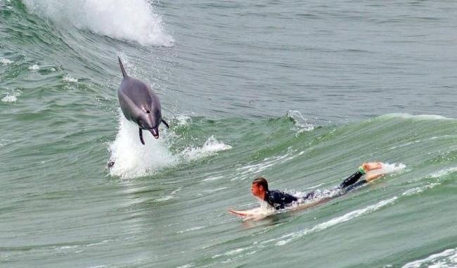 Фото прикол  про дельфинов