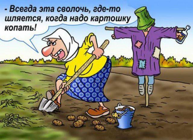 Смешные картинки с надписями про дачу огород, открыток для