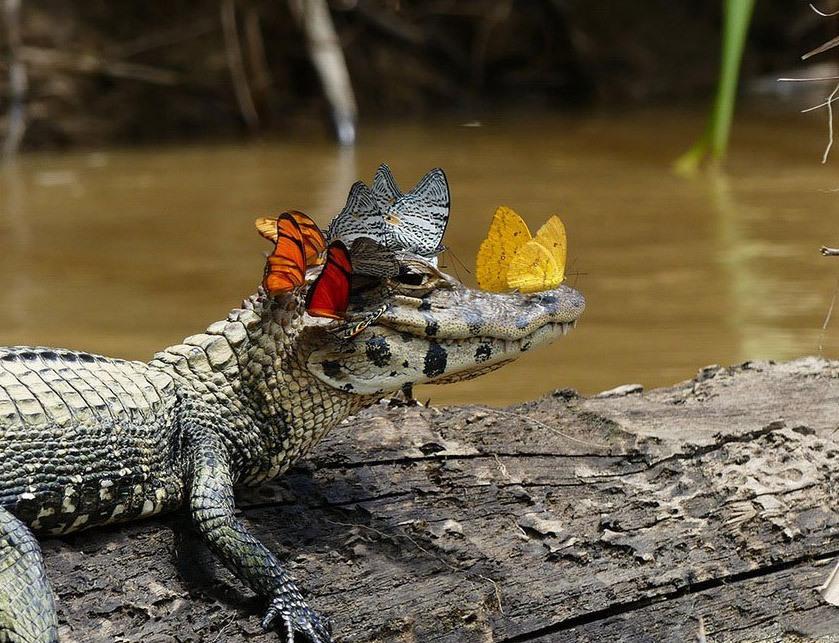 Поздравляю крестинами, картинки смешных крокодилов