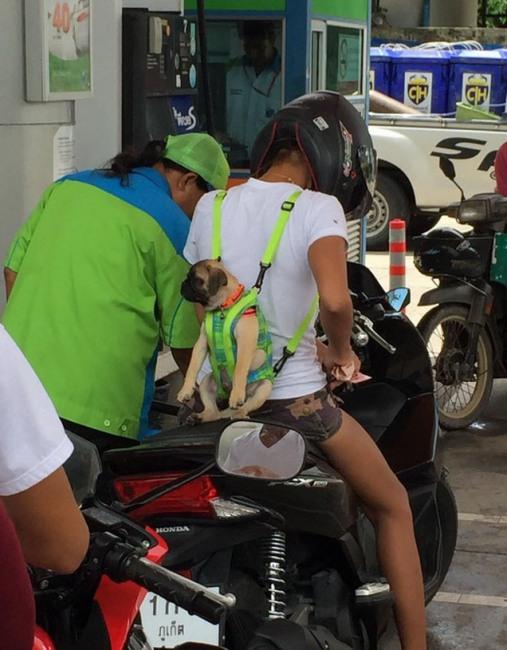 Фото прикол  про собак и мотоциклистов