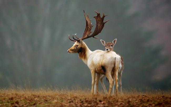 Фото прикол  про оленей