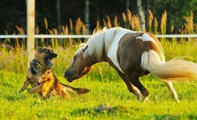 Фото прикол  про лошадей и собак