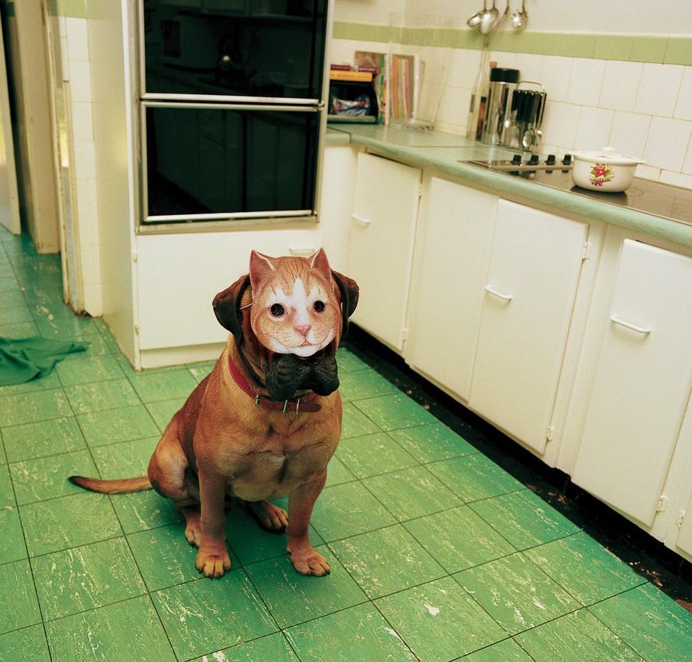Счастливого, картинки с юмором про собак