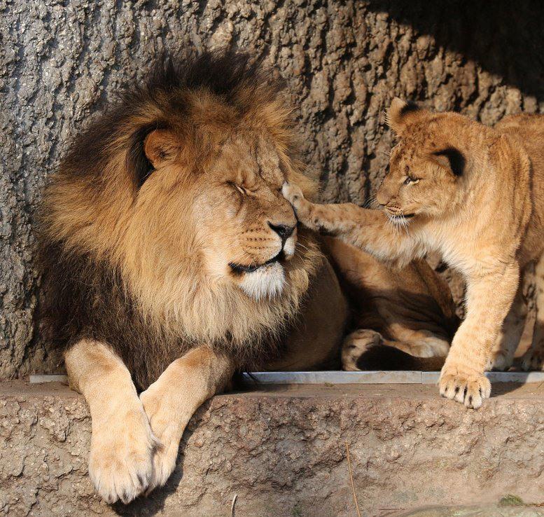 прикольные картинки про львов