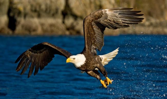 Фото прикол  про птиц
