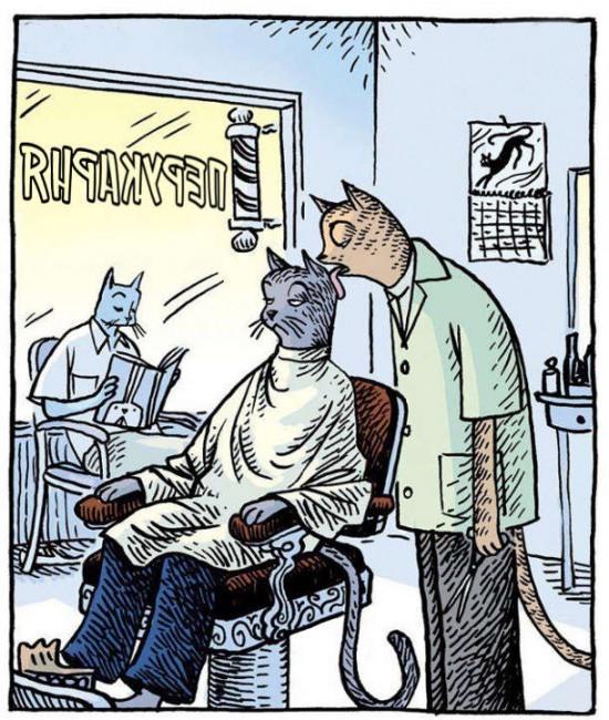 Картинка  про котов и парикмахера