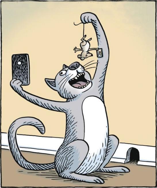 Картинка  про котов, мышей и селфи