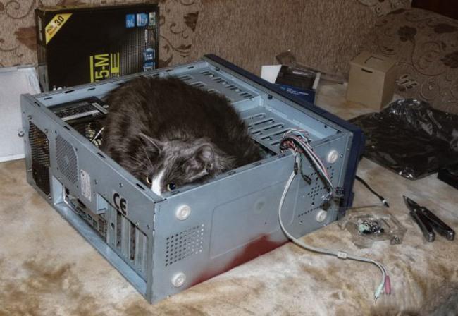 Фото прикол  про котов и компьютеры