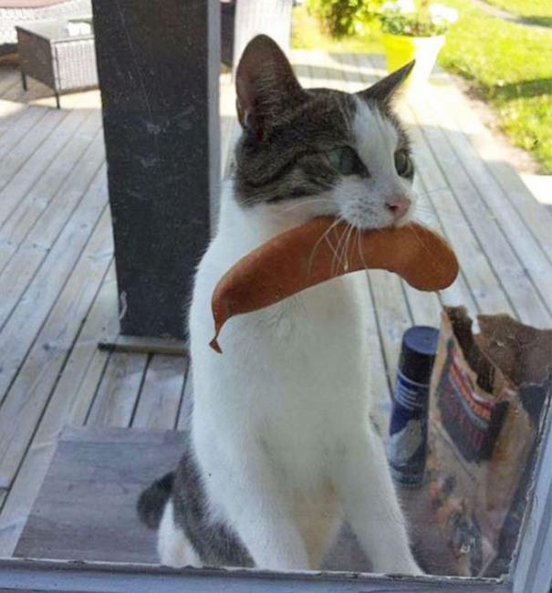 Фото прикол  про котов и сосиски