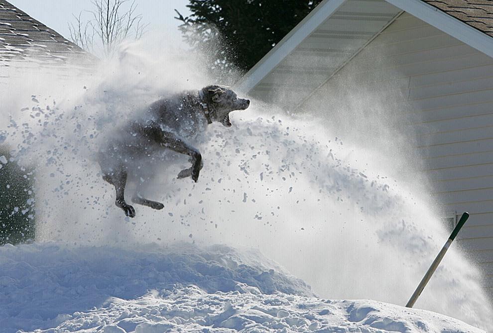 смешное фото снегопада рассказывается необыкновенной женщине
