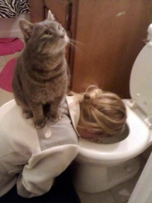 Фото прикол  про котов и тошноту