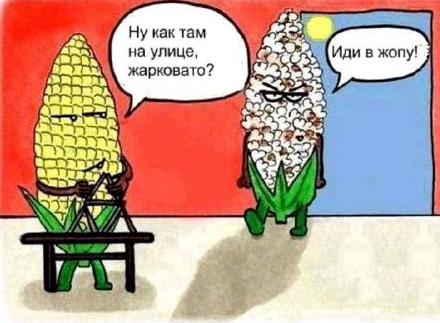 Картинка  про кукурузу
