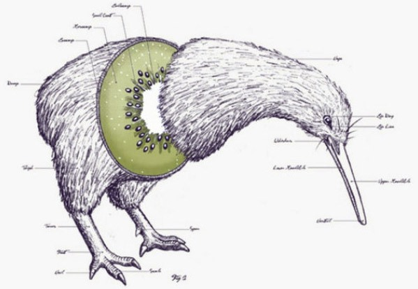 Картинка  про птиц