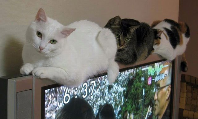 Фото прикол  про котов и телевизор