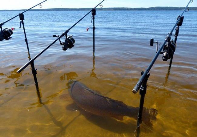 Фото прикол  про рыбу и рыбалку