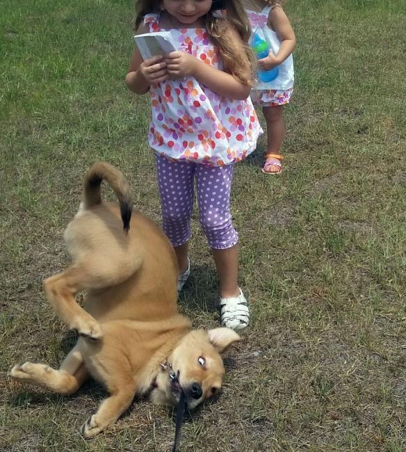 Фото прикол  про собак