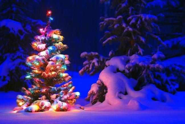 Фото прикол  про ёлку и зиму