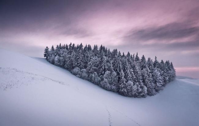 Фото прикол  про зиму и ёлку