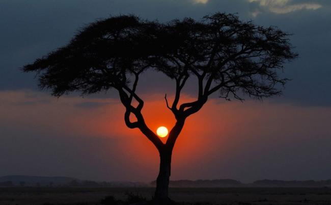 Фото прикол  про закат и дерево