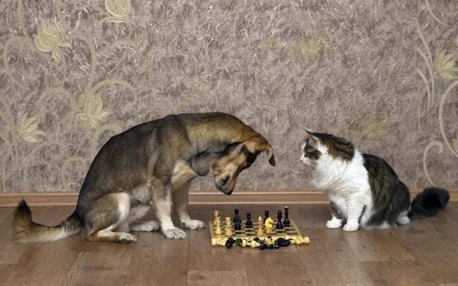 Фото прикол  про котов, собак и шахматы