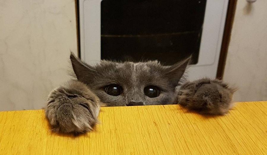 Приколи про котов картинки