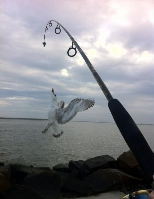 Фото прикол  про птиц и рыбалку