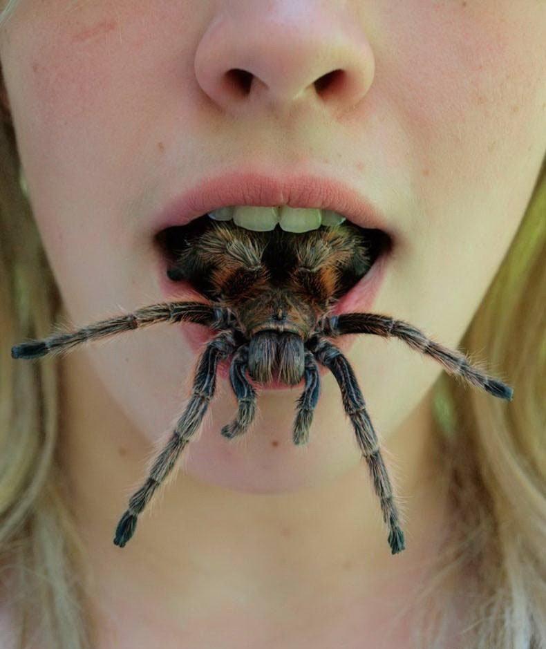 Мерзкие картинки с пауками, приколы про надю