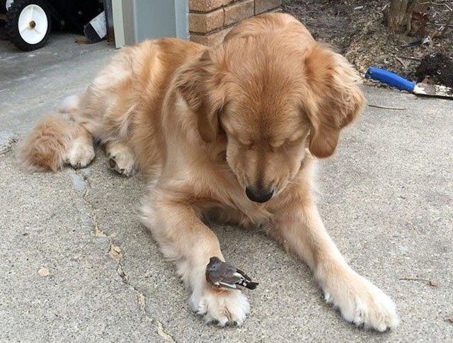 Фото прикол  про собак и птиц