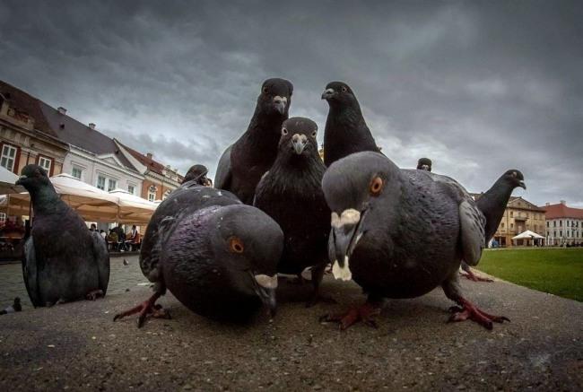 Фото прикол  про голубей