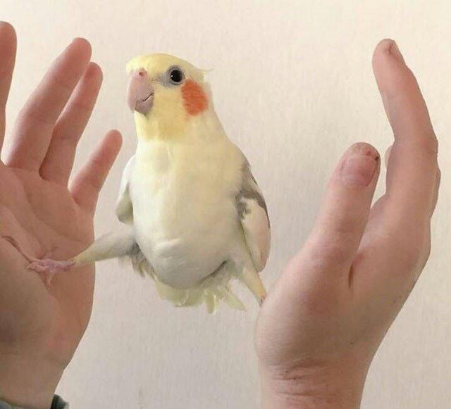 Фото прикол  про попугаев