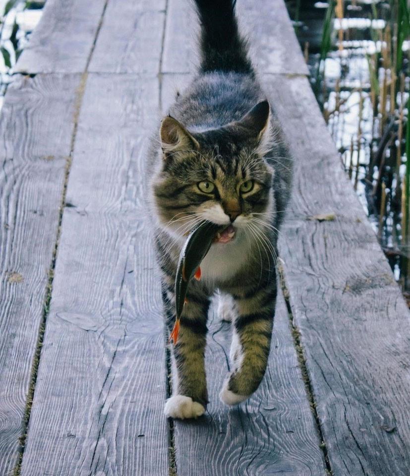 Новые приколы про котов картинки, днем
