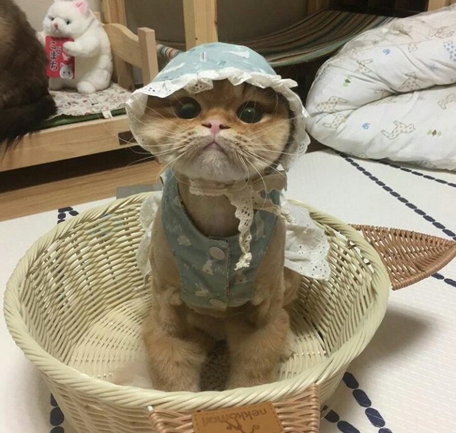 Прикольные смешные картинки про котов