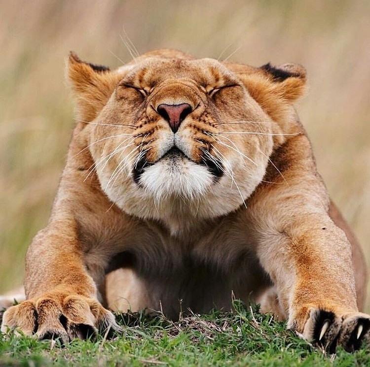 Детском, картинки со львом приколы